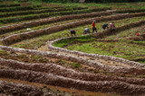 Rice Terrace NAN-THAILAND,Farmers repair ridge rice fields with beautiful views.