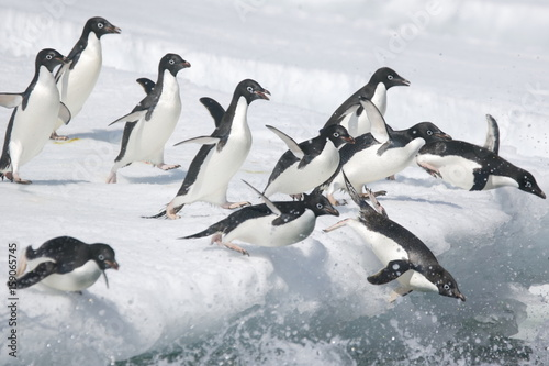 Foto op Plexiglas Antarctica Adelie penguins leap into the ocean from an iceberg