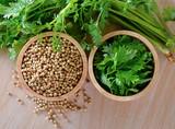 Coriander and seeds - 159066736