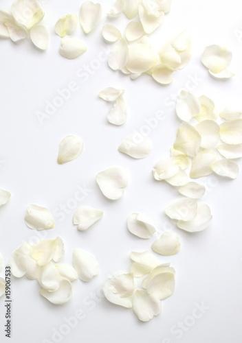 Foto Murales ナチュラルな白い薔薇の花びら、白背景