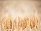 Wheat Background - 159069375