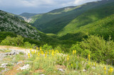 Россия, весенний Крым. Желтые цветы на фоне Большого крымского каньона