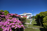 絶景 鶴見岳のミヤマキリシマ