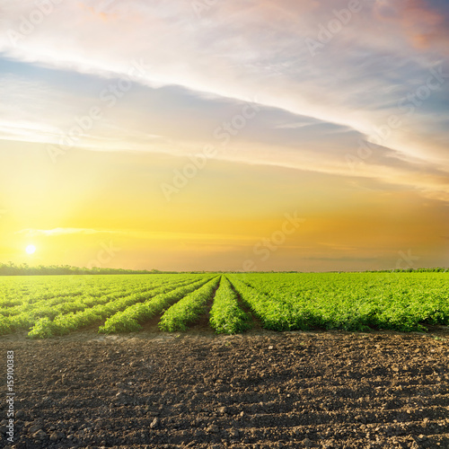orange sunset in clouds over green agriculture field with tomatoes Poster