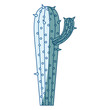 blue shading silhouette of cactus with small branch vector illustration