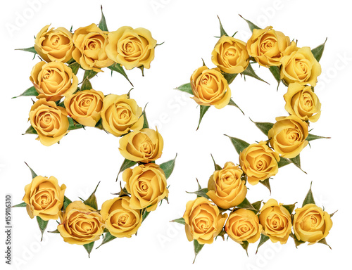 Poster Arabic numeral 52, fifty two, from yellow flowers of rose, isolated on white bac