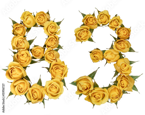 Poster Arabic numeral 83, eighty three, from yellow flowers of rose, isolated on white