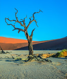 National Park in Namibia