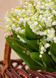 Flower lily of the valley closeup in a basket