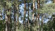 Natural forest landscape with coniferous and deciduous trees video footage