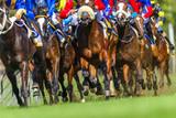 Horse Racing Closeup Animals Legs Hoofs Grass Track