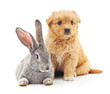 Quadro Puppy and  rabbit.