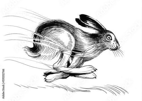 Running hare - 159202766