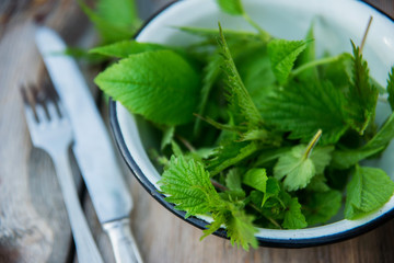 Freshly picked young nettles in a bowl ready for salad (Urtica dioica)