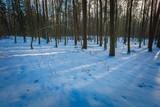 Winter polish forest