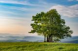 Lonely tree on Grandeus mountain, Poland landscape, Spisz