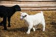 Animals on a rural farm