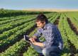 Farmer with tablet in soybean field