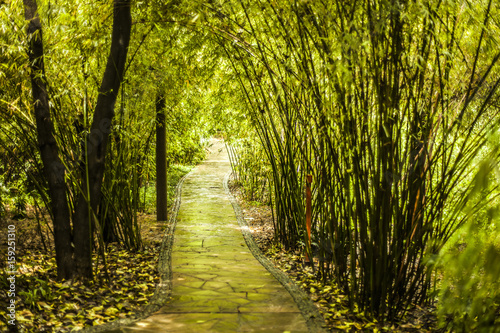 Aluminium Bamboe Stone path through a bamboo forest in China
