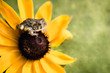 Macro Tiny Frog Toad on Flower