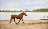 Horse runs along the river.