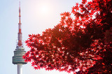 Seoul Tower and red autumn maple leaves at Namsan mountain in South Korea.
