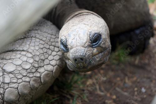 Aluminium Schildpad Tortoise