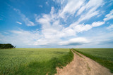 Green field and sky with clouds at sunny day