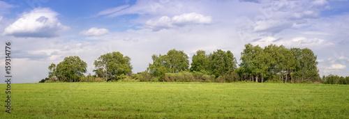 панорама с березовой рощей в поле, Россия