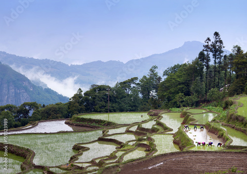 Deurstickers Rijstvelden Terraced rice fields in Yuanyang, Yunnan Province, China