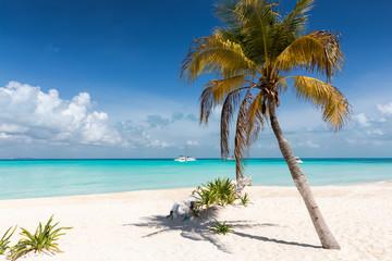 Strand in der Karibik mit Palme und türkisem Wasser: Isla Mujeres, Mexiko