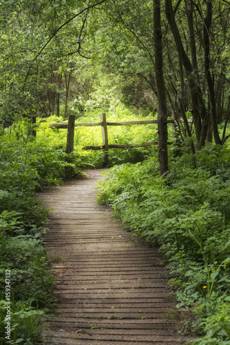 Beautiful landscape image of wooden boardwalk through lush green English countryside forest in Spring - 159347132