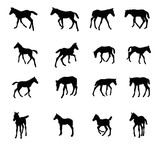 Set of silhouettes of foals - 159361105