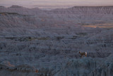 Big Horn Sheep / Ram Silhouette on Cliff at Sunset in Badlands National Park 3