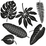 Vector black and white illustration set of exotic leaves. - 159406548