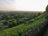 Landschaft mit Weinberg