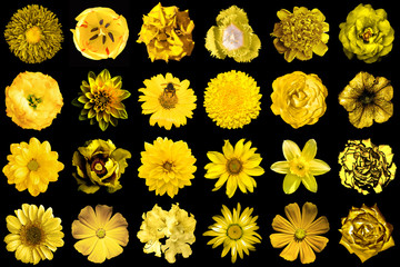 Mega pack of natural and surreal yellow flowers 24 in 1 isolated on black