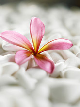flower and pebbles resting on white stones