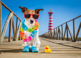 dog at the beach and ocean with plastic duck