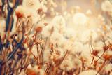 Dandelion flowers in summer. Floral nature background.