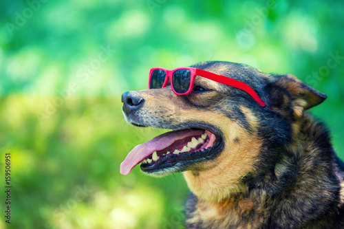 Fashion portrait of a dog wearing sunglasses sitting outdoor in the park Poster