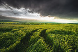Wheat field and dramatic sky landscape