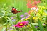 Schmetterling 357