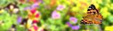 Schmetterling 361