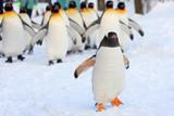 ペンギン行進