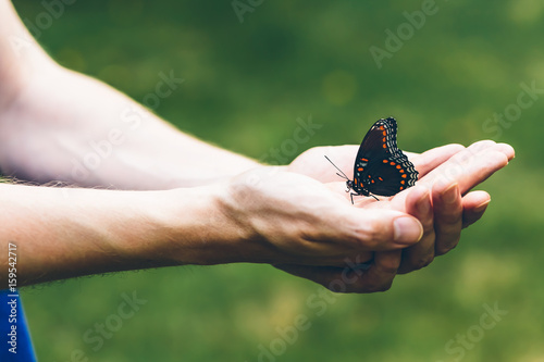 Butterfly perched on a man's hands