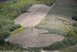 Parcelles de vignes dans le Beaujolais