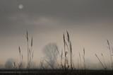łąki w pochmurny dzień