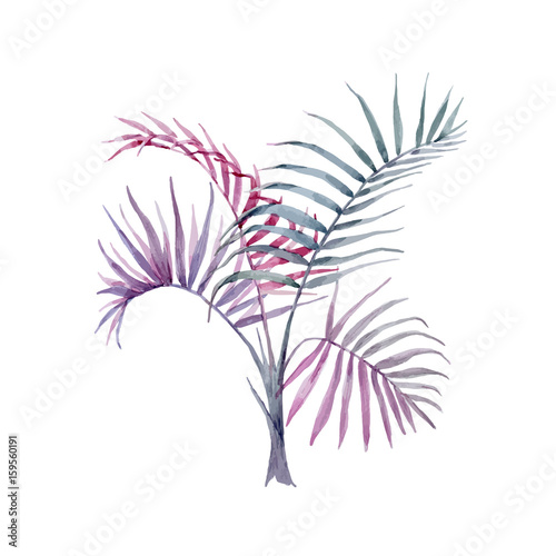 Watercolor vector hand drawn palms - 159560191