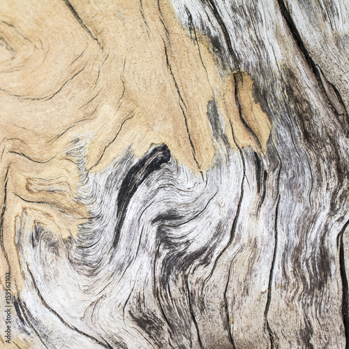 Wood texture background. - 159562103